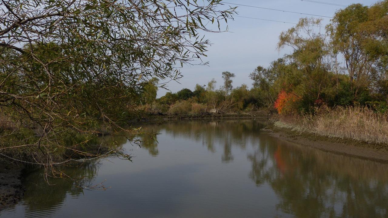 【 日記 11/27 】 荒川自然生態園_a0185081_20305061.jpg