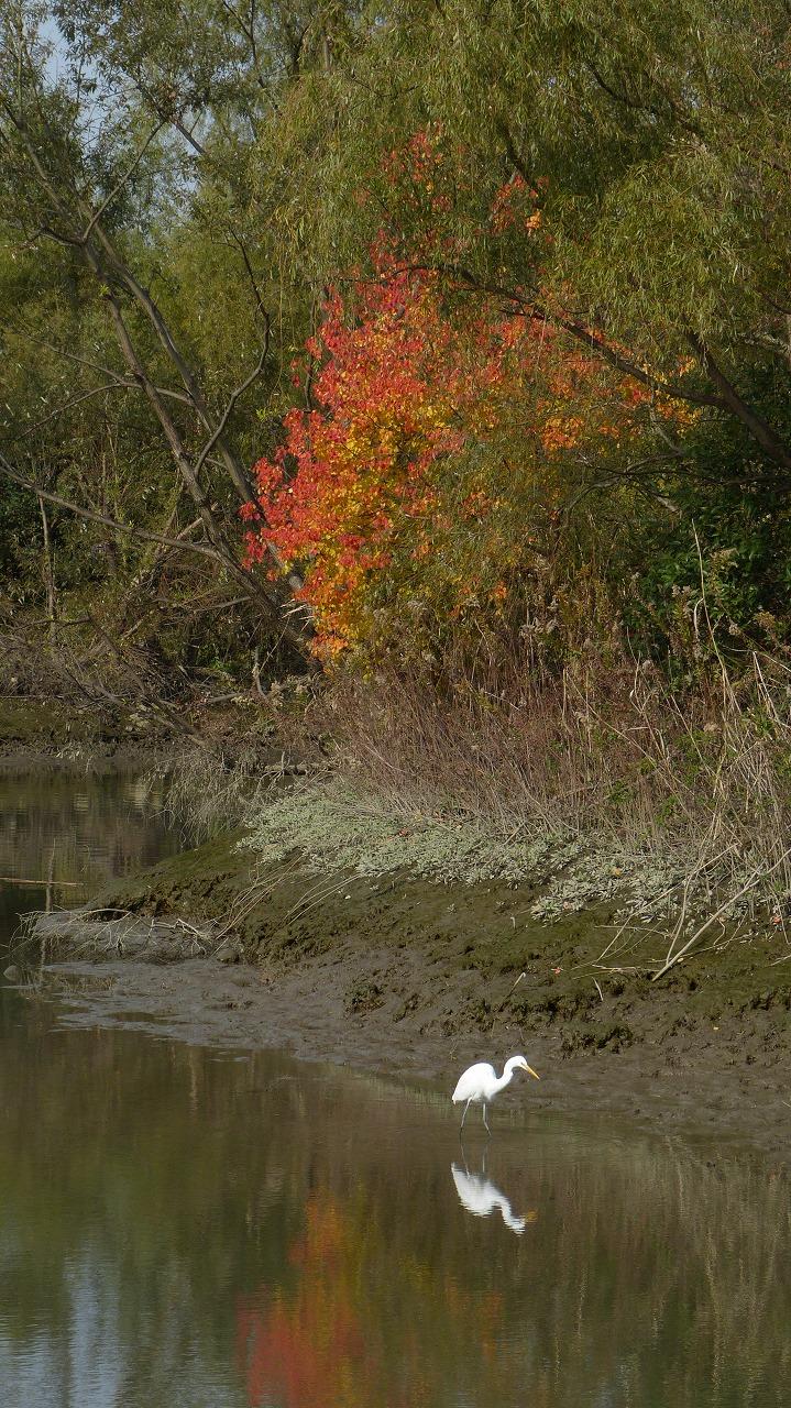 【 日記 11/27 】 荒川自然生態園_a0185081_2031633.jpg