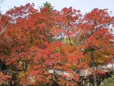 大窪寺へ紅葉見物_e0201281_19575856.jpg