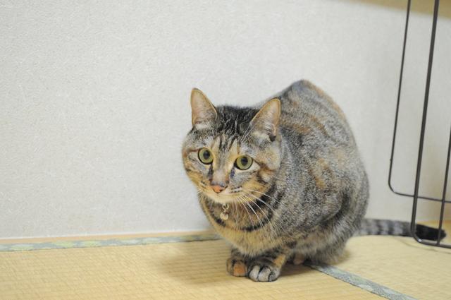 迷子の子猫ちゃん♪_a0126590_11439.jpg
