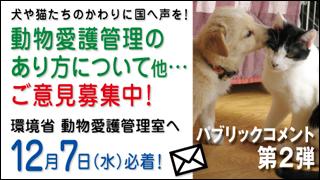 迷子の子猫ちゃん♪_a0126590_1344963.jpg