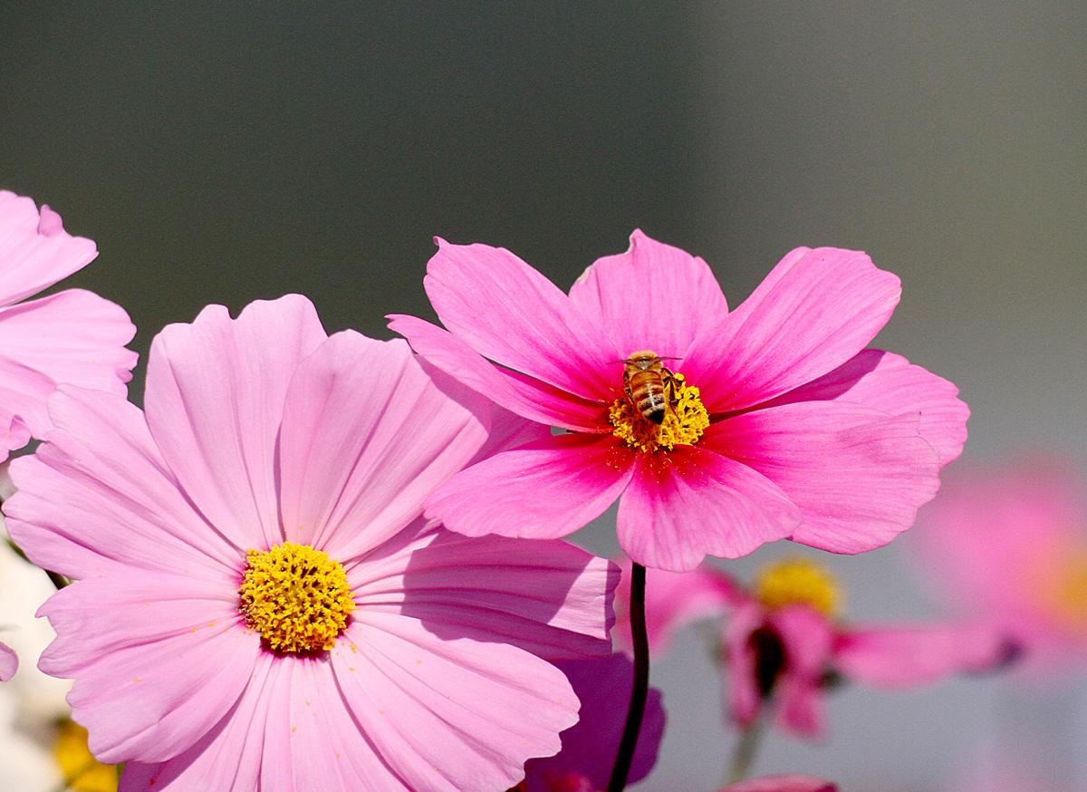 花の文化園_e0254493_2325876.jpg