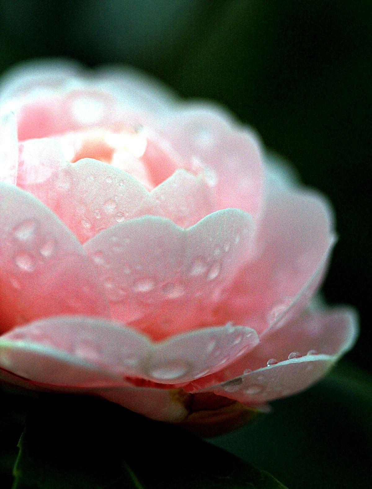 花の文化園_e0254493_2326189.jpg