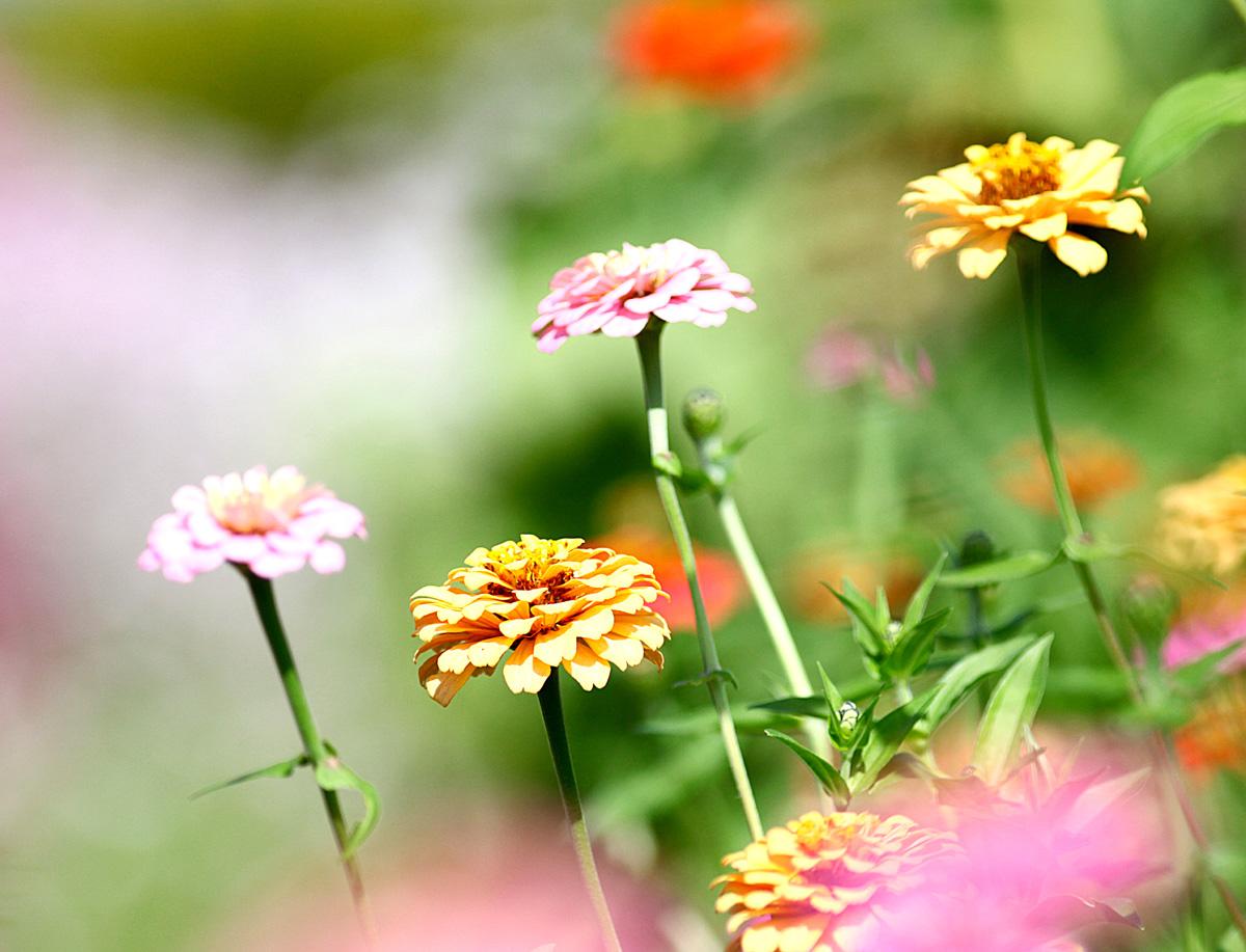 花の文化園_e0254493_23263213.jpg