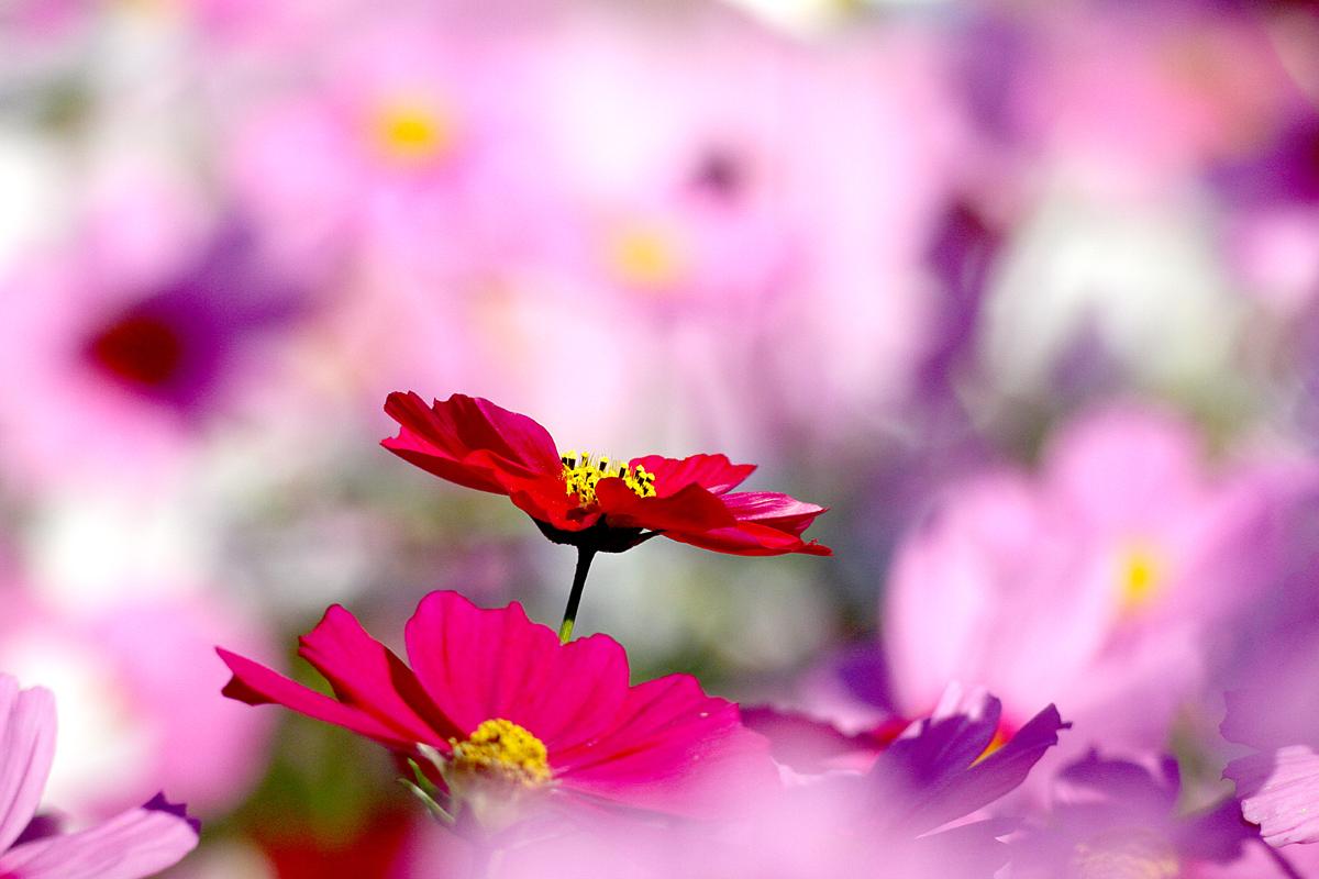 花の文化園_e0254493_2327624.jpg