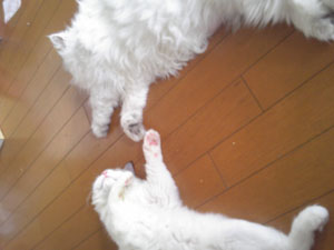 床暖 あったか~ 横浜@よーこさん_e0033609_11383453.jpg