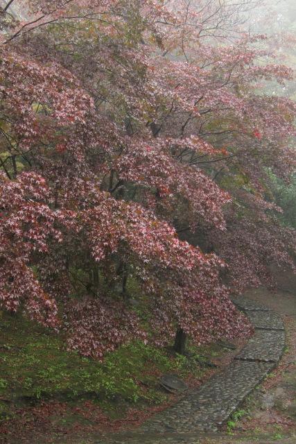 向ヶ丘遊園  S95で雨の生田緑地_b0061717_118259.jpg