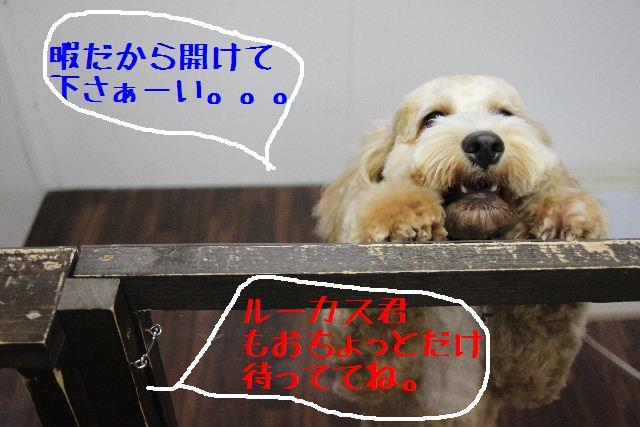 b0130018_17295478.jpg