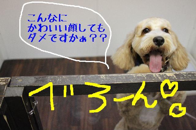 b0130018_17301119.jpg