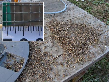 蕎麦のゴミ除去終了_c0063348_6313699.jpg