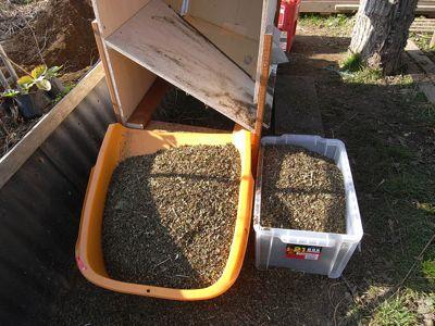 蕎麦のゴミ除去終了_c0063348_6314521.jpg