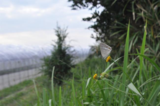 2011年11月の蝶_e0194952_742843.jpg