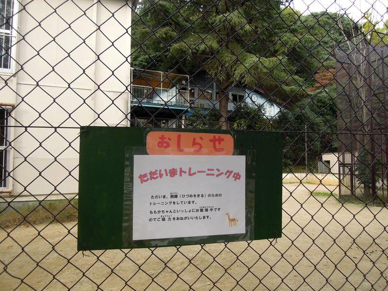 桃花ちゃんのハズバンダリートレーニング_b0024758_019759.jpg