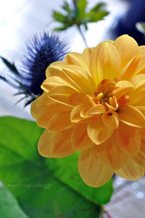 flower***_f0234062_2110174.jpg