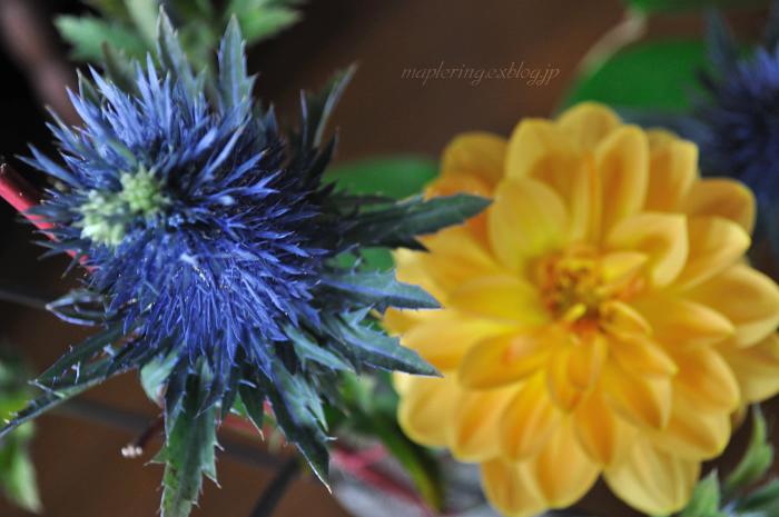 flower***_f0234062_21103053.jpg