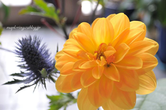 flower***_f0234062_2110431.jpg