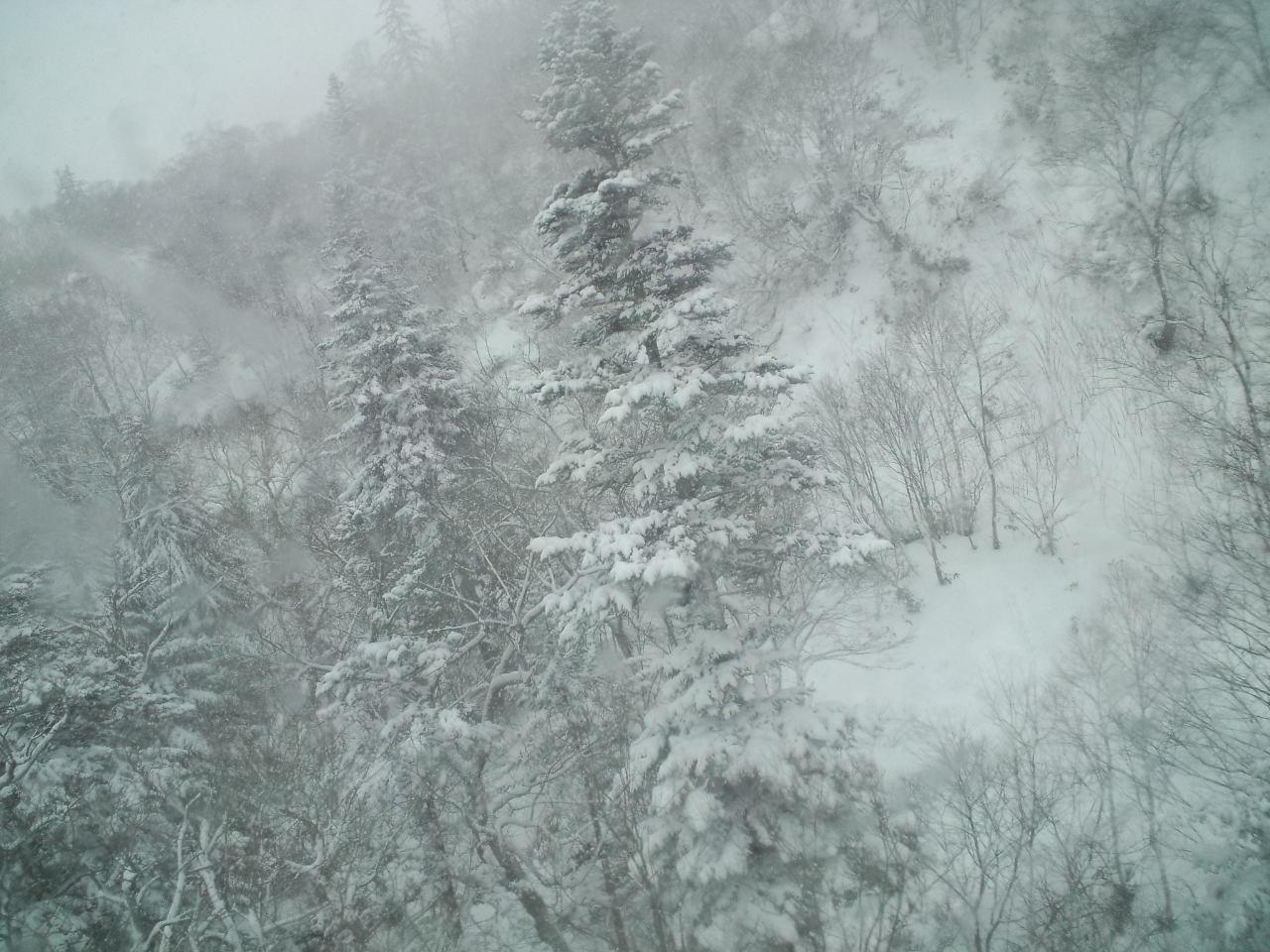 札幌3日目 ☆ 札幌国際スキー場_c0151965_2338356.jpg