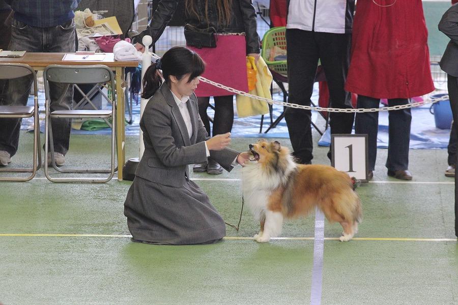 JKC神奈川南シェルティ部会展_f0126965_21384213.jpg