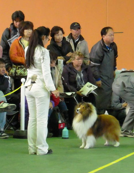 JKC神奈川南シェルティ部会展_f0126965_21425196.jpg