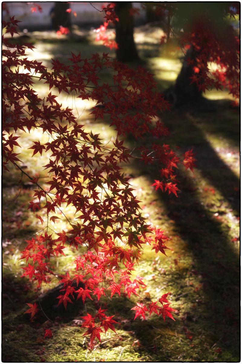 紅葉 2011_f0021869_15141821.jpg