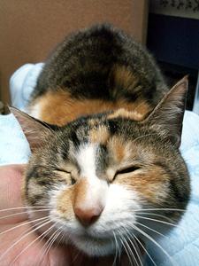 猫丸まる_a0001971_2274864.jpg