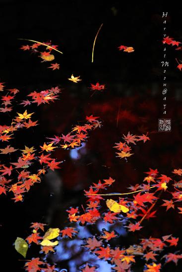 秋色~和菓子_b0208495_01050.jpg