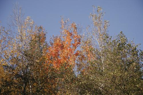 森は遊園地_f0106597_22195913.jpg