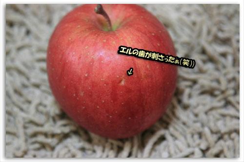 a0086698_0113887.jpg