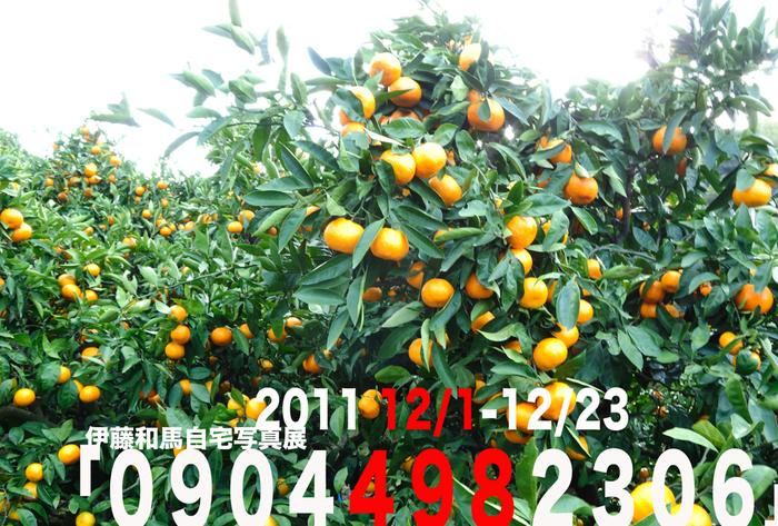 b0179698_0174416.jpg