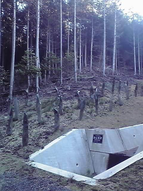林業 それで?_e0037600_226235.jpg