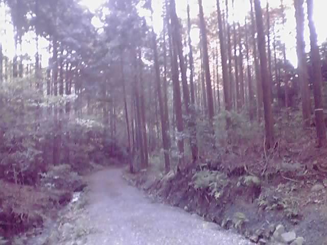 林業 それで?_e0037600_2275416.jpg