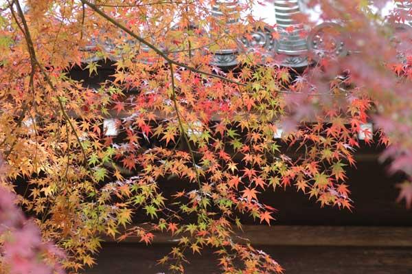 本土寺へ_c0051105_23515852.jpg