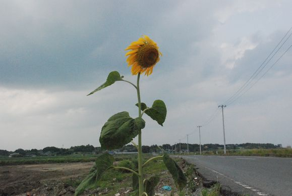 福島の人々の放射能被曝による苦悩は続く_d0174710_17522433.jpg