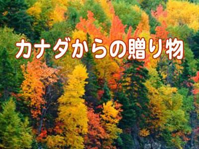 c0166018_125818.jpg