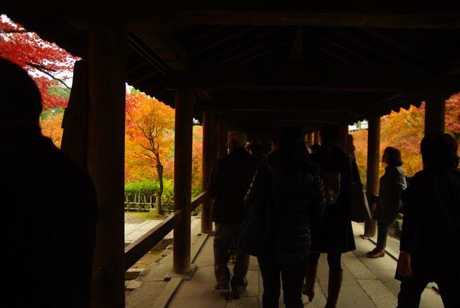 色とりどりの紅葉、東福寺_e0171336_4244282.jpg