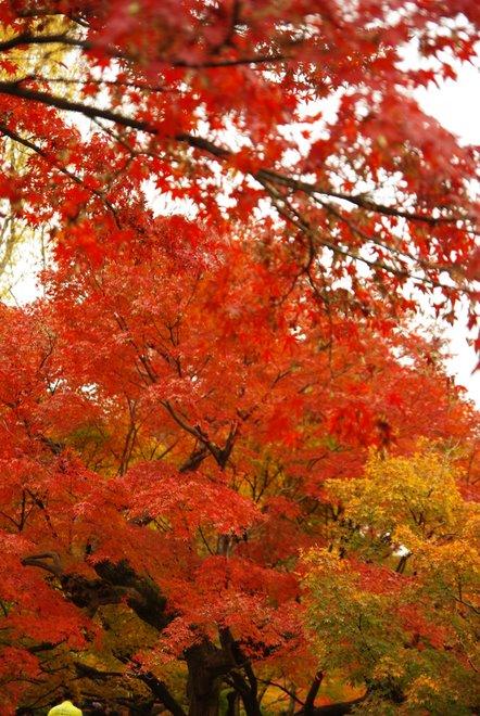 色とりどりの紅葉、東福寺_e0171336_4253380.jpg
