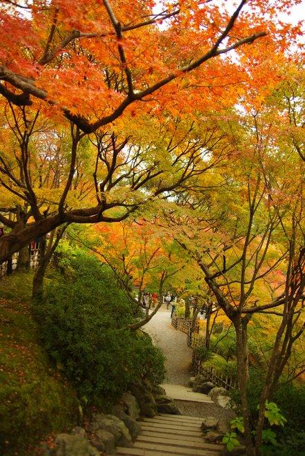 色とりどりの紅葉、東福寺_e0171336_4261748.jpg