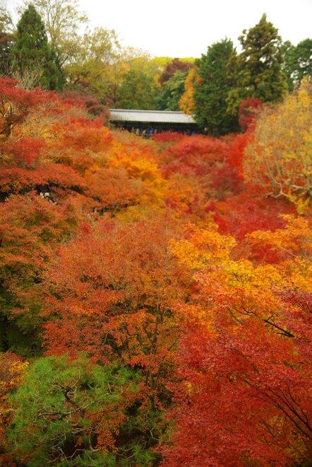 色とりどりの紅葉、東福寺_e0171336_430193.jpg