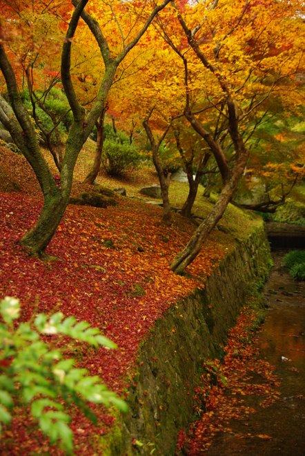 色とりどりの紅葉、東福寺_e0171336_4325997.jpg