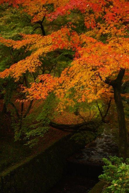 色とりどりの紅葉、東福寺_e0171336_4344691.jpg