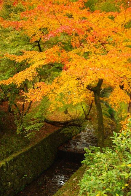 色とりどりの紅葉、東福寺_e0171336_4362978.jpg
