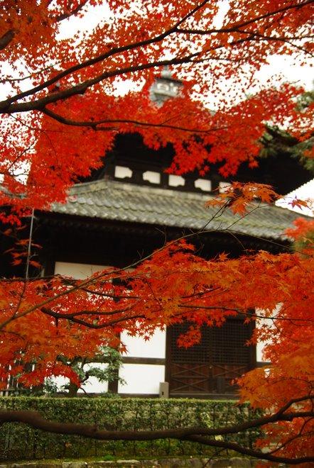 色とりどりの紅葉、東福寺_e0171336_4374570.jpg