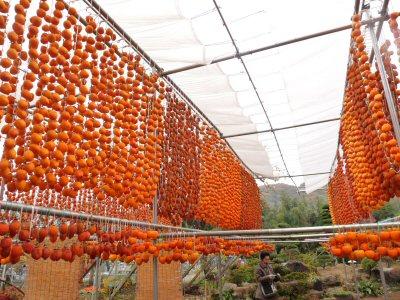 コロ柿の里を歩く_f0019247_2214315.jpg