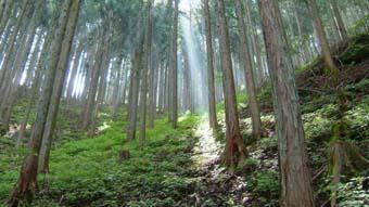 秩父の林業家_c0177863_19213960.jpg