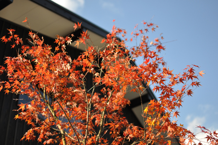 建物完成見学会 「まゆ」に包まれた和室のある家_e0164563_13374533.jpg