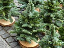 中世のクリスマスマーケット_e0195766_1401954.jpg