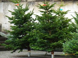 中世のクリスマスマーケット_e0195766_1403458.jpg