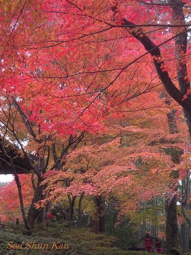 京都 鷹峯の紅葉_a0164068_22355360.jpg