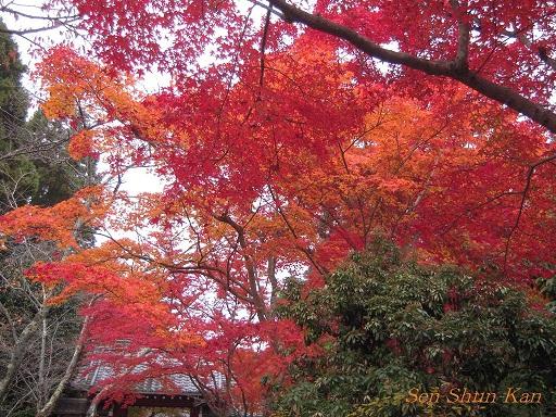 京都 鷹峯の紅葉_a0164068_2236555.jpg