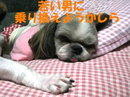 d0140668_810524.jpg